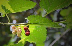 pianta che riequilibra gli ormoni