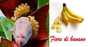 fiore di banano