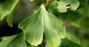 piante prevengono Alzheimer, depressione, ansia