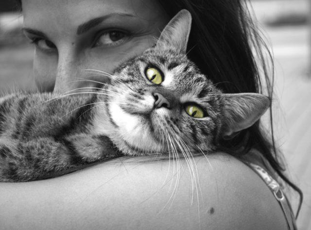 avere un gatto fa bene alla salute