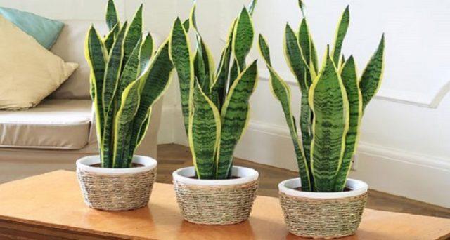 piante-da-mettere-in-camera-da-letto