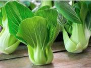 fonti vegetali di calcio