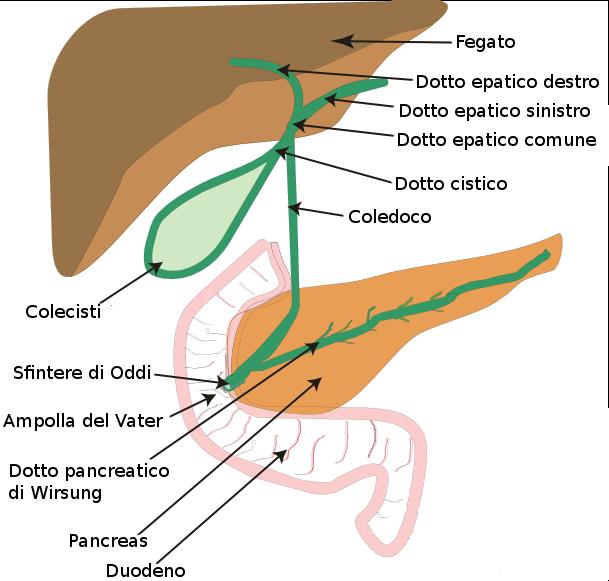 disintossicare-il-fegato