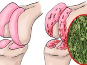 cartilagine di anca e ginocchia