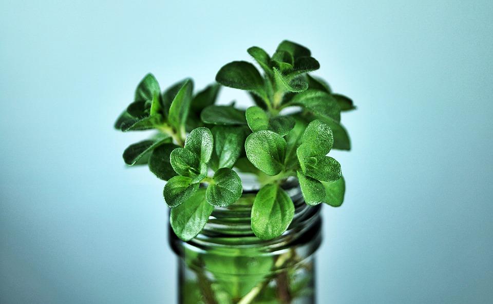 Le erbe aromatiche che si coltivano in acqua senza terra - Erbe aromatiche in casa ...