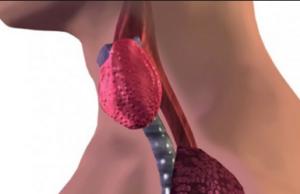 alimenti che danneggiano la tiroide